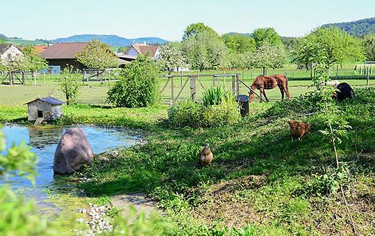 Tierpatenschaften