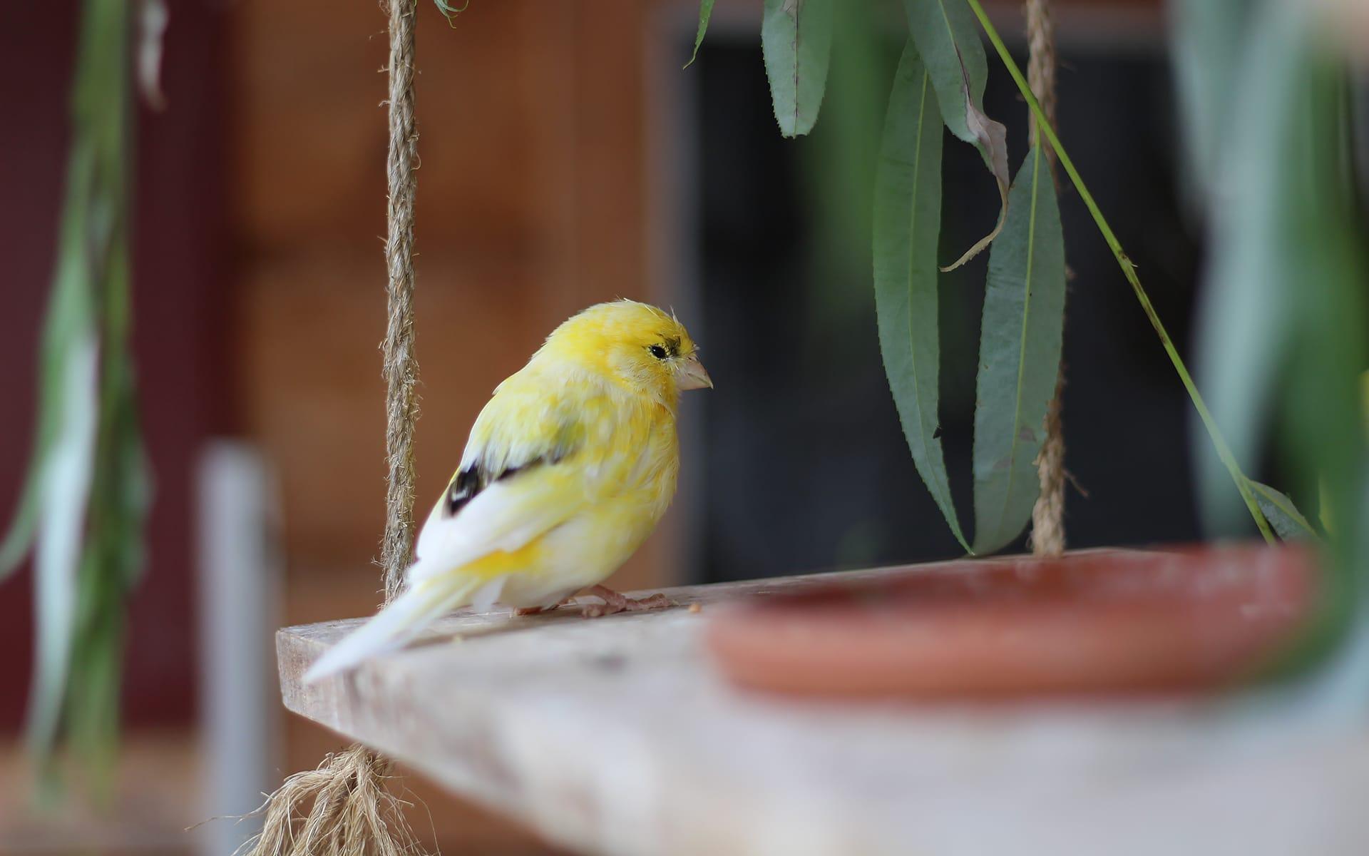 Ziervögel